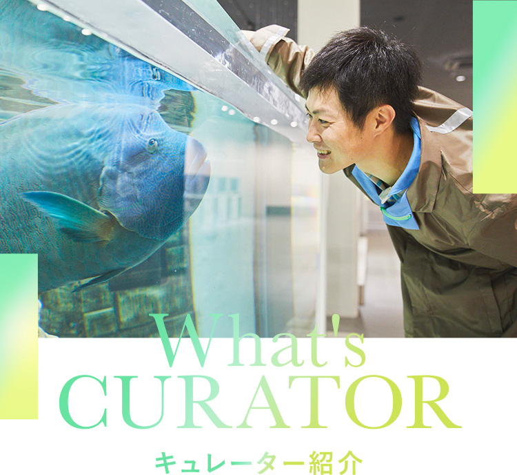 What's CURATOR キュレーター紹介